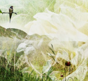 Singing Grasland | Fotografie von Theresa Lambrecht, Fotodruck auf Alu-Dibond, limitierte Edition