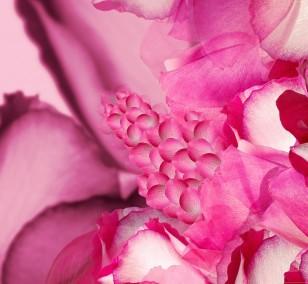 Rose Garden | Fotografie von Theresa Lambrecht, Fotodruck auf Alu-Dibond, limitierte Edition