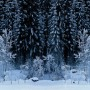 Black Forest - White Wood