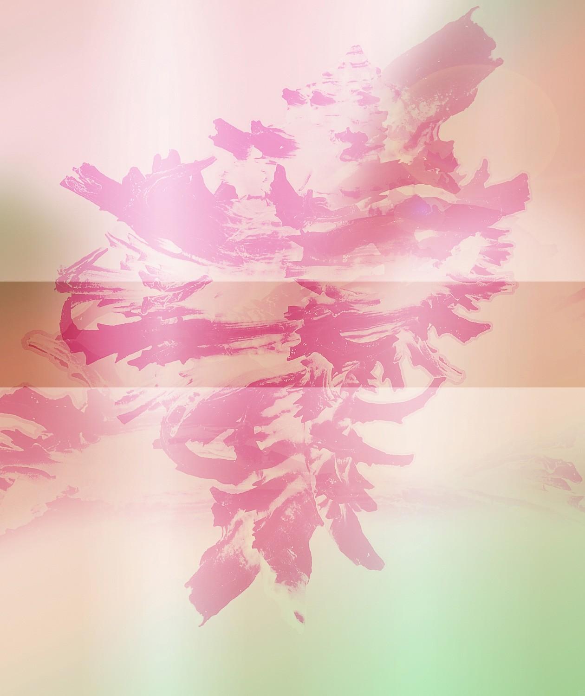 Colorful Shells   Fotografie von Theresa Lambrecht, Fotodruck auf Alu-Dibond, limitierte Edition