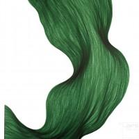 Evergreen Fold