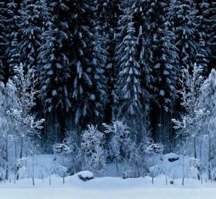 Black Forest - White Wood | Fotografie von Finkbeiner & Salm, Lambda-Fotodruck auf Alu-Dibond, limitierte Edition
