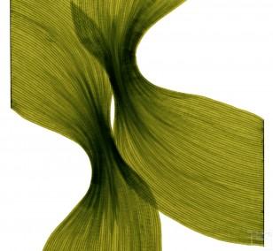 Banana Leaf Sheer Folds | Lali Torma | Zeichnung | Kalligraphietusche auf Papier