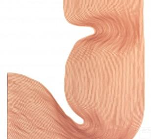 Watermelon Powder  | Lali Torma | Zeichnung | Kalligraphie-Tinte auf Papier