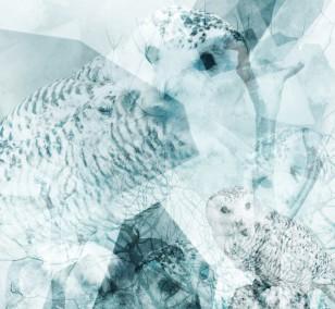 Owl Eyes | Fotografie von Theresa Lambrecht, Fotodruck auf Alu-Dibond, limitierte Edition