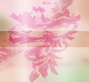 Colorful Shells | Fotografie von Theresa Lambrecht, Fotodruck auf Alu-Dibond, limitierte Edition