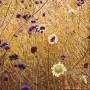 Korbblütler
