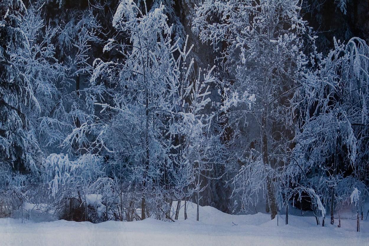 Black Forest - White Wood, Detail | Fotografie von Finkbeiner & Salm, Lambda-Fotodruck auf Alu-Dibond, limitierte Edition