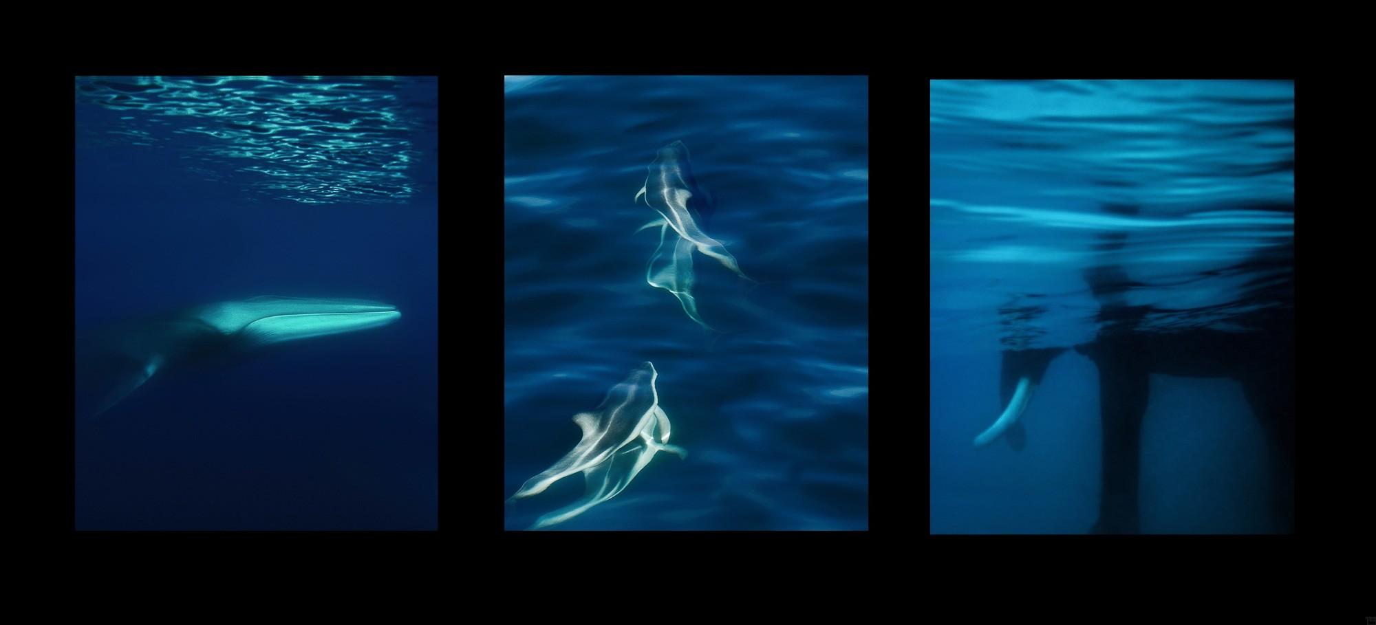 Oceans 1 - 3 | Fotografiecollagen von Finkbeiner & Salm, Direktdruck auf Alu-Dibond, limitierte Edition 50+2 - 02