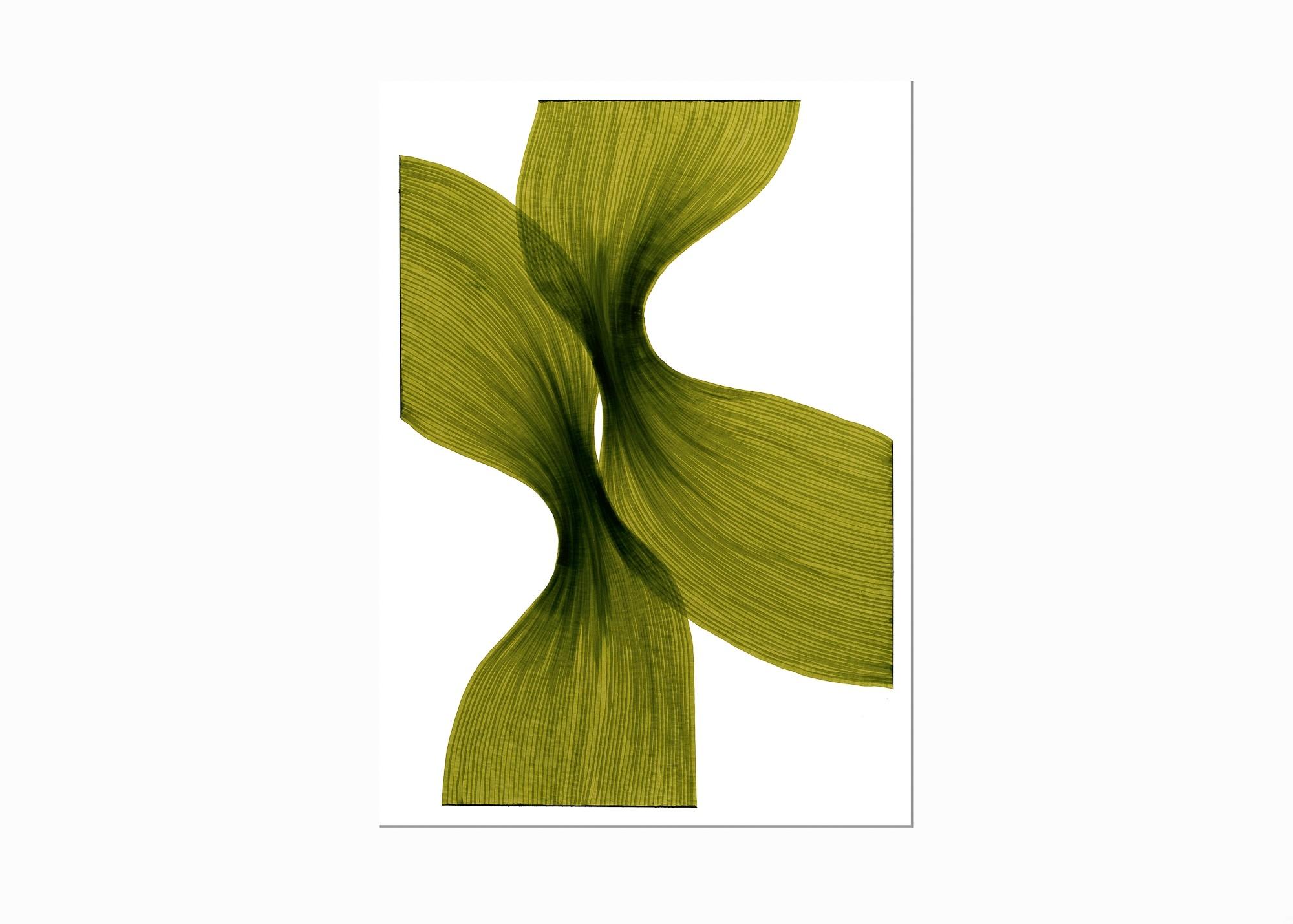 Banana Leaf Sheer Folds   Lali Torma   Zeichnung   Kalligraphietusche auf Papier - 2
