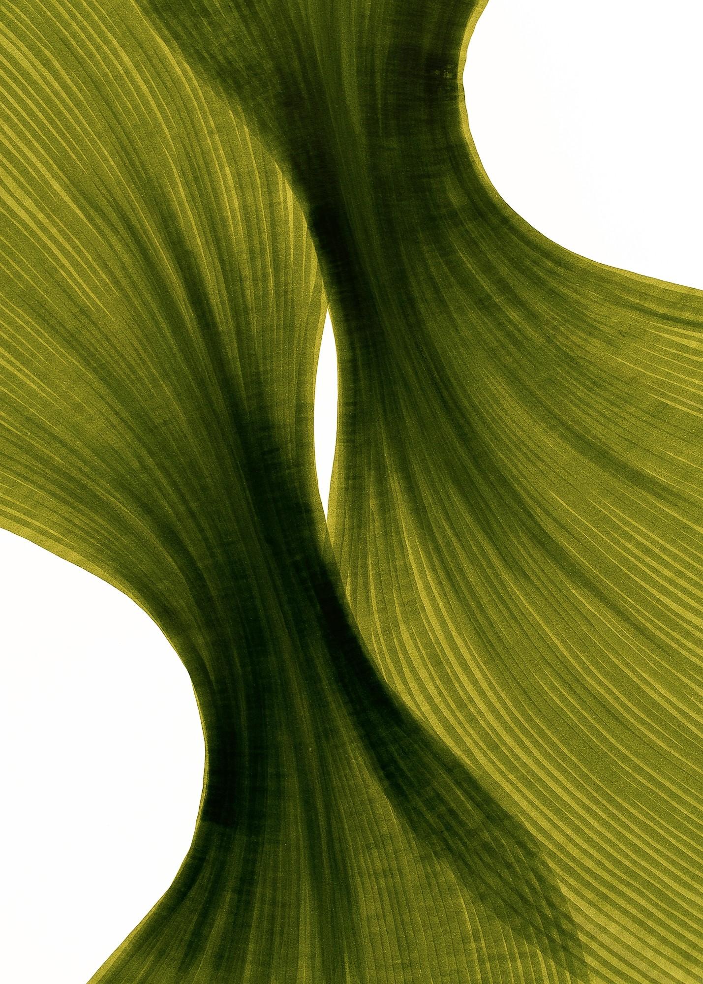 Banana Leaf Sheer Folds   Lali Torma   Zeichnung   Kalligraphietusche auf Papier, Detail