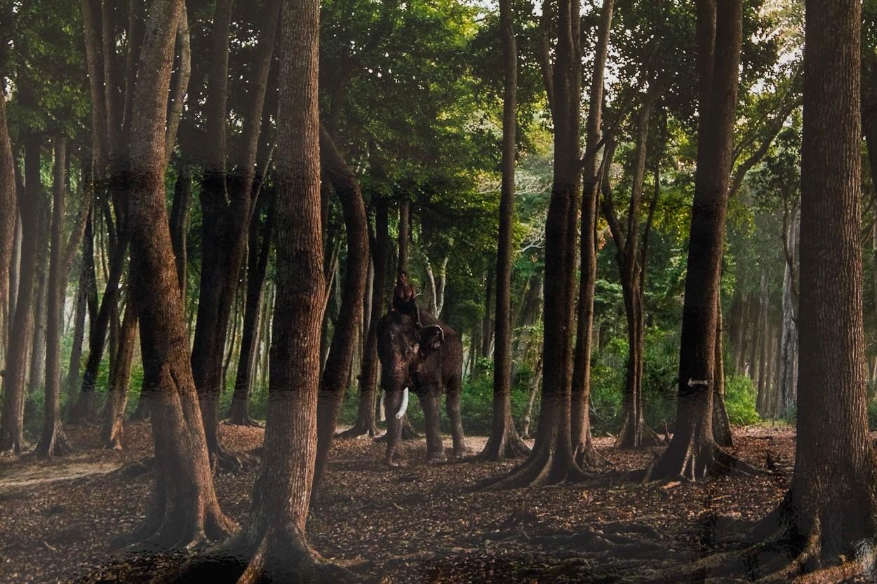 Elefantenwald, Detail | Fotografie von Finkbeiner & Salm, Lambda-Foto-Abzug auf Alu-Dibond-Platte, limitierte Edition