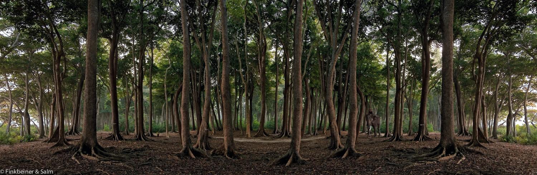 Elefantenwald | Fotografie von Finkbeiner & Salm, Lambda-Foto-Abzug auf Alu-Dibond-Platte, limitierte Edition