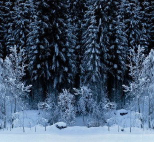 Black Forest - White Wood | photography by Finkbeiner & Salm, photo print on Aluminium Dibond, edition