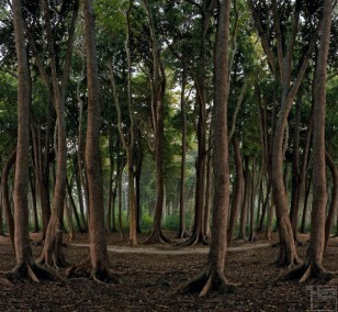 Elephant forest | photography by Finkbeiner & Salm, photo print on Aluminium Dibond, edition