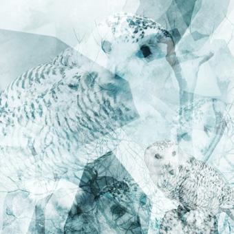 weartberlin Online Galerie | Owl Eyes | Fotografie von Theresa Lambrecht