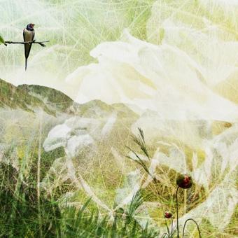 weartberlin Online Galerie | Singing Grasland | Fotografie von Theresa Lambrecht